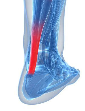 3d rendered illustration of the achilles tendon